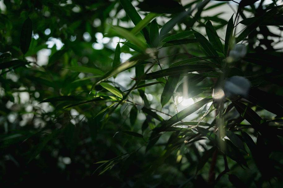 Biosphäre Potsdam Tropenwald