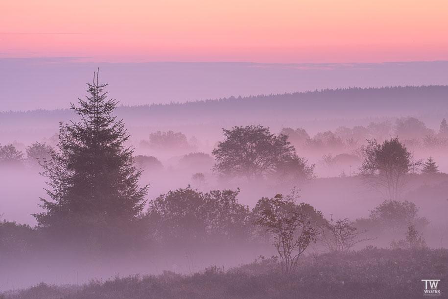 Herrliche Farbgebung des kalten Morgenhimmels (B1409)