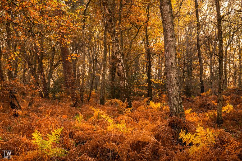 An vielen Stellen gab es alte und schöne Birken (B1513)