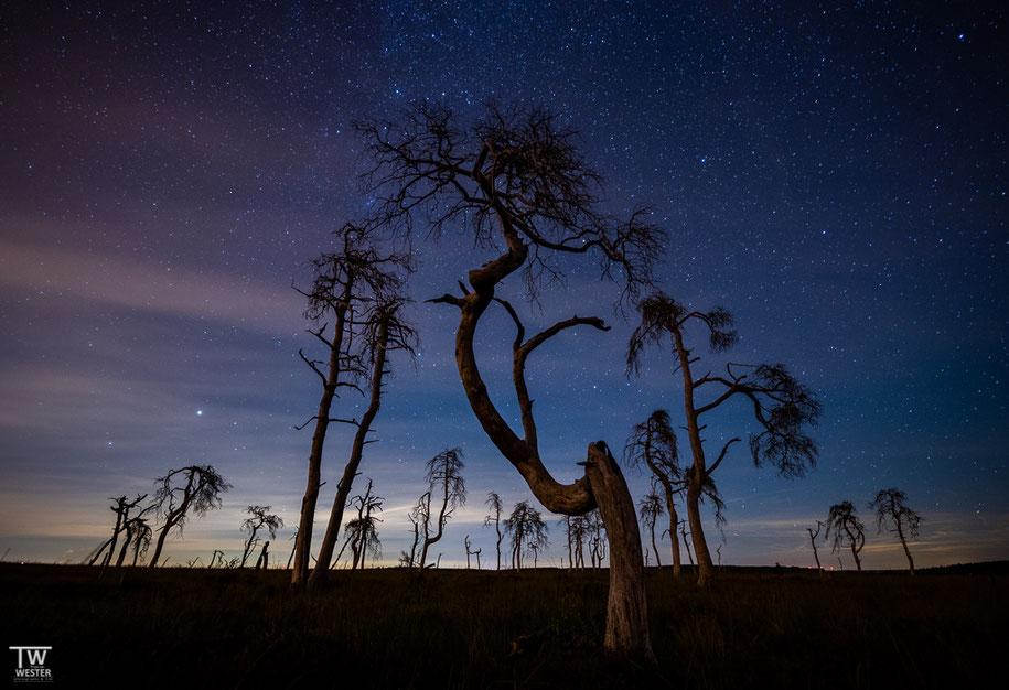 Nachts beleuchteten einige Wolken am Nachthimmel die Baumstämme sanft… (B1408)
