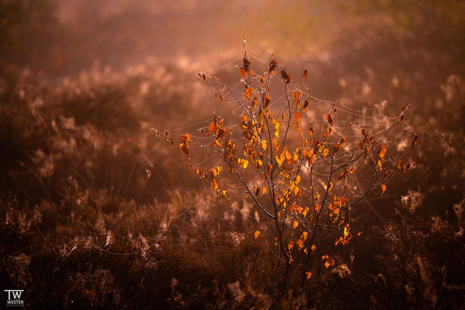 Im ersten Morgenlicht (B1469)