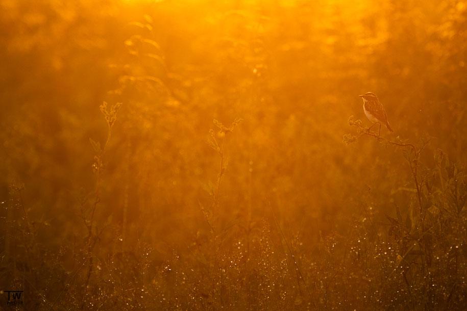 Im ersten Morgenlicht (B1370)