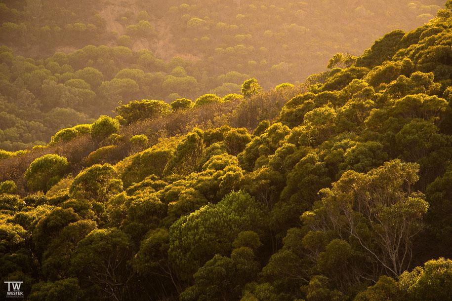 Die Wälder der Costa Vicentina (B1399)