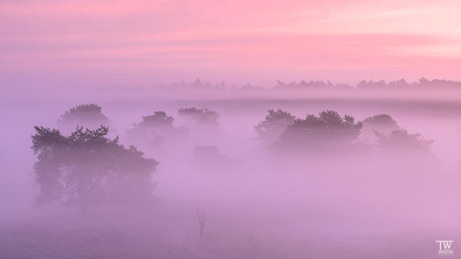 Ein wunderbarer Morgen (B1461)