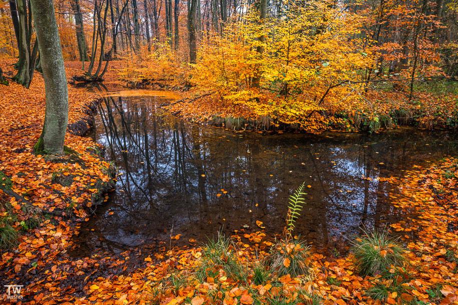 Am Ufer (B1490)