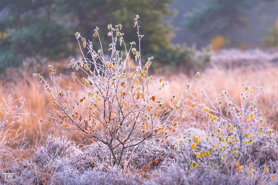 Frozen landscape (B1483)