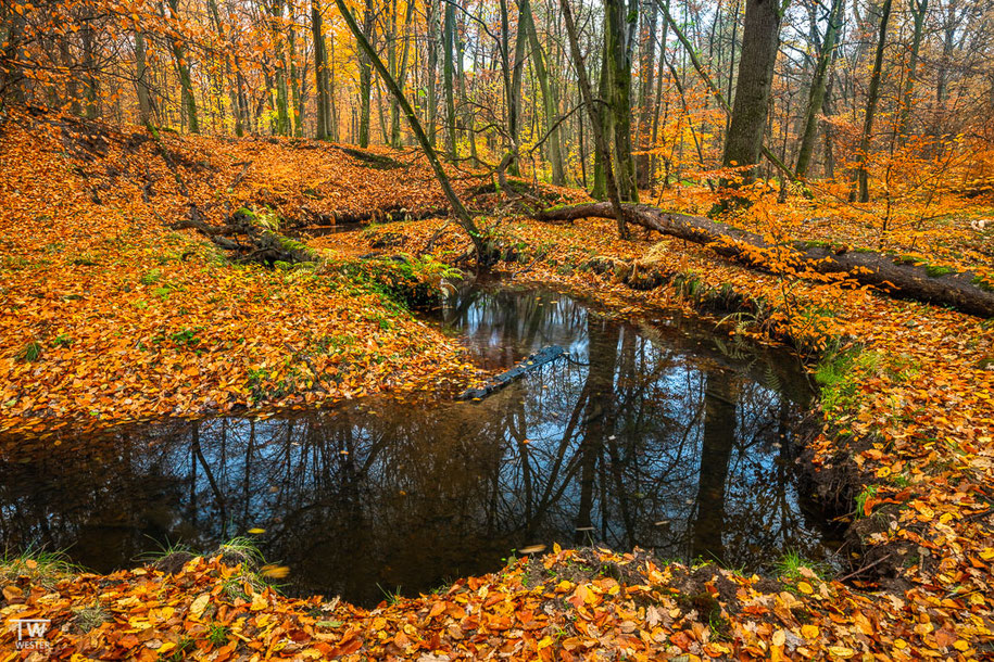 Die Windstille im Wald führte dazu, dass man nahezu das Laub fallen hörte 😉 (B1492)