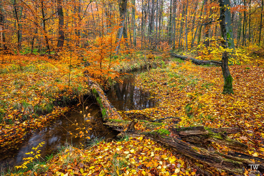 An manchen Stellen gab es noch tolle Herbstfarben… (B1499)