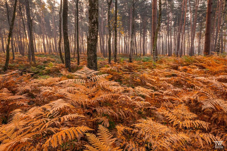 Bei einigen Waldstücken war der Farnbewuchs so stark, dass man keine anderen Pflanzen mehr erkennen konnte – auf diese Stellen habe ich mich besonders konzentriert (B1521)