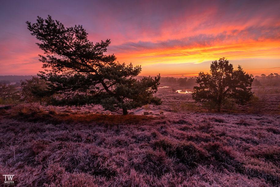 Gleicher Morgen wie drei Bilder zuvor: die mit Eis überzogene Heide (eigentlich weiß) reflektierte extrem die Himmelsfarben (B1479)