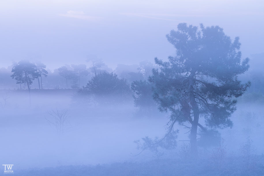 Nebelstreifen (B1462)