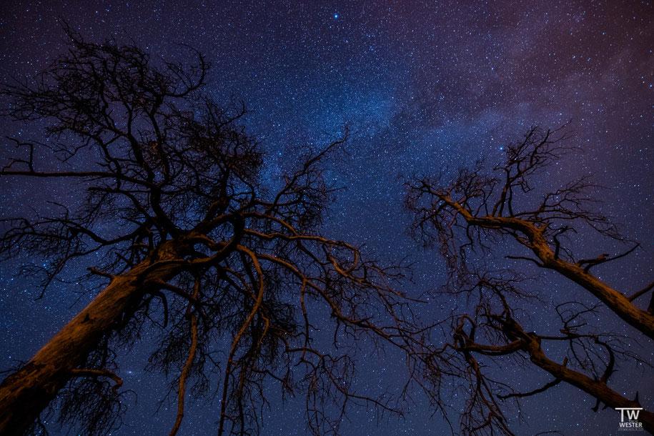 Die Milchstraße hoch über den Kiefern (B1412)
