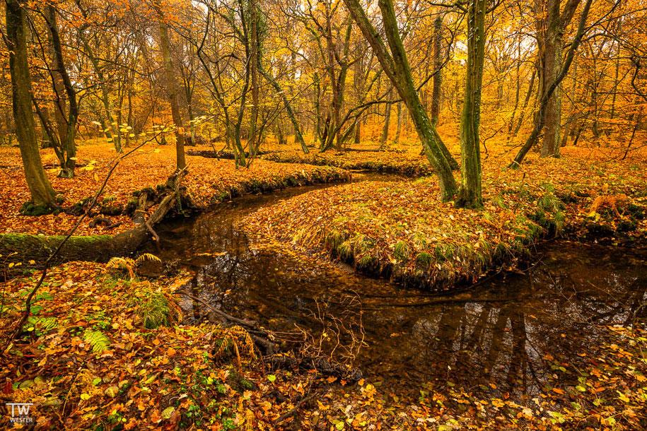 Am nächsten Morgen ging es im Ruhrgebiet weiter. Der natürliche Bachverlauf erstreckte sich über einige Kilometer und der gesamte Wald war sehr naturbelassen… (B1500)