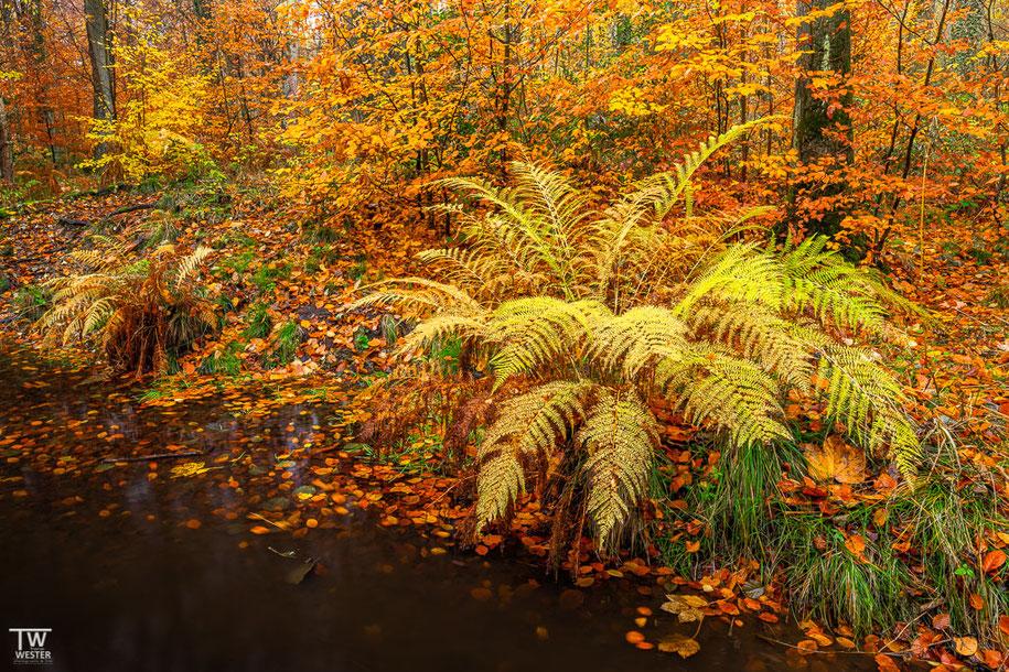 Die Herbstfarben waren voll im Gange (B1521)