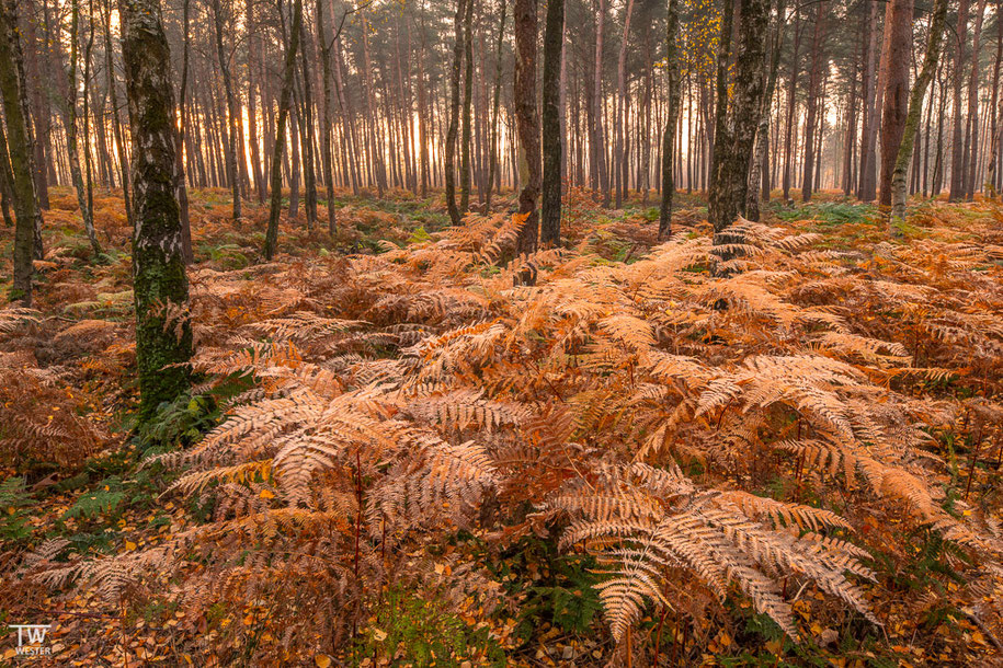 Im Birkenwald… (B1511)