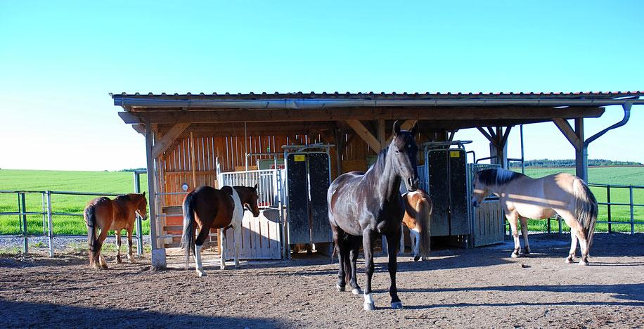 Aktiv Offenstall Pferde