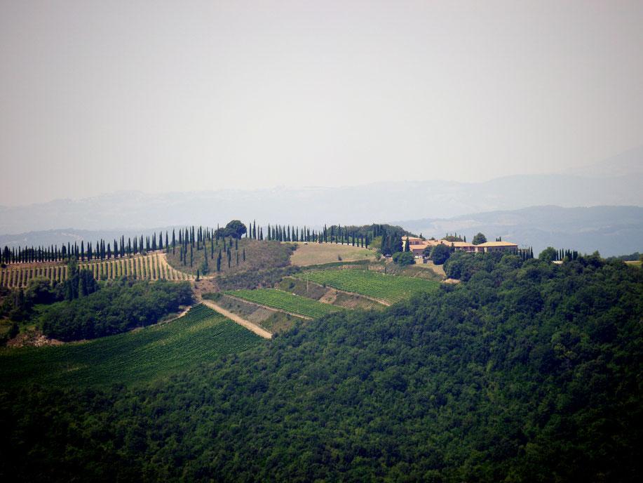 Brunello-Weinberge und meterhohe Säulenzypressen umgeben das kleine Weingut