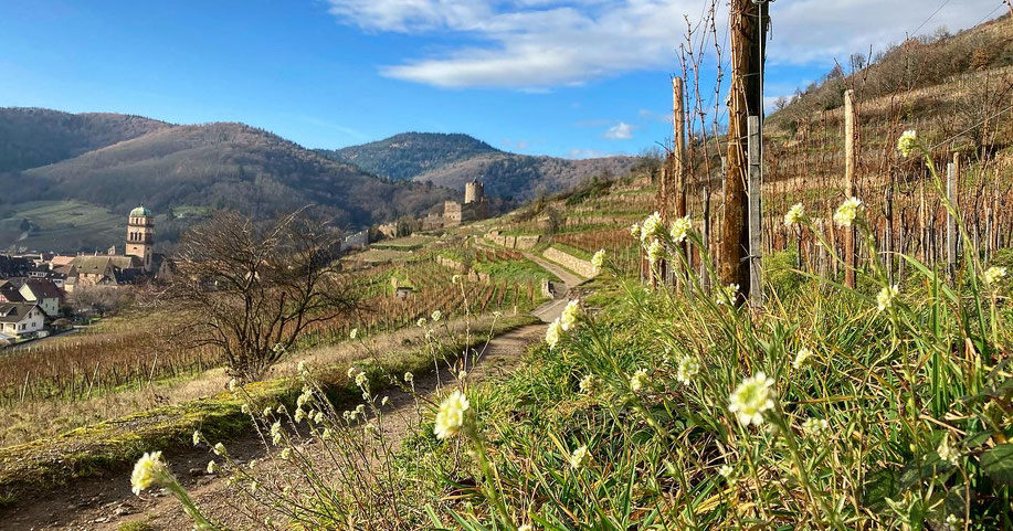 Le Schlossberg est un terroir exceptionnel à tous points de vue ! (18 Décembre 2020) www.cheminsbioenalsace.fr