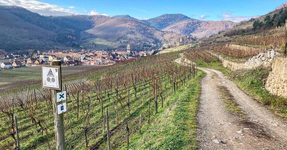 Abrité par le massif des Vosges contre les intempéries venant régulièrement de l'Ouest, le Schlossberg s'épanouit dans une zone de régime de pluies réduit à 500mm/an. (18 Décembre 2020) www.cheminsbioenalsace.fr