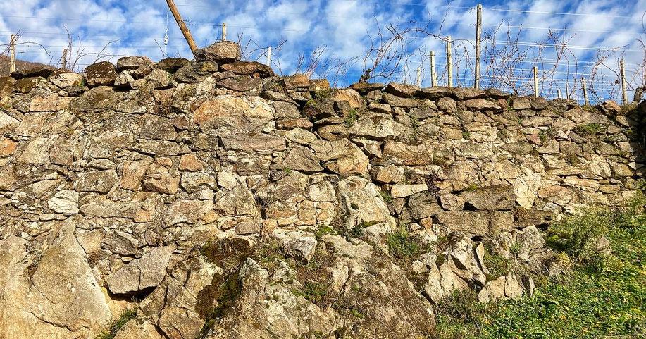 La capacité du Schlossberg à conserver la chaleur et sa richesse minérale, imprègnent la personnalité des vins produits. (18 Décembre 2020) www.cheminsbioenalsace.fr
