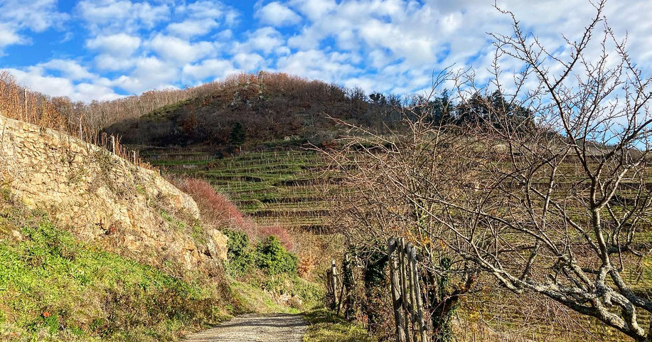 Au Schlossberg, les vignerons d'aujourd'hui sont les créateurs d'une œuvre constituée de l'alliance du passé et de leurs engagements actuels au service des meilleurs vins de lieux.  (18 Décembre 2020) www.cheminsbioenalsace.fr