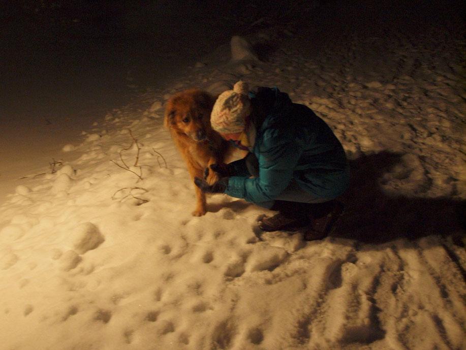 …und ab und zu müssen die Pfoten vom Schnee befreit werden.