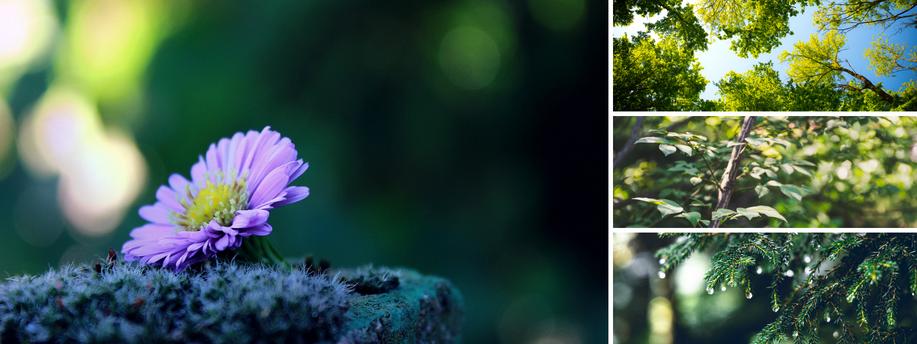 Waldbaden | Shinrin Yoku