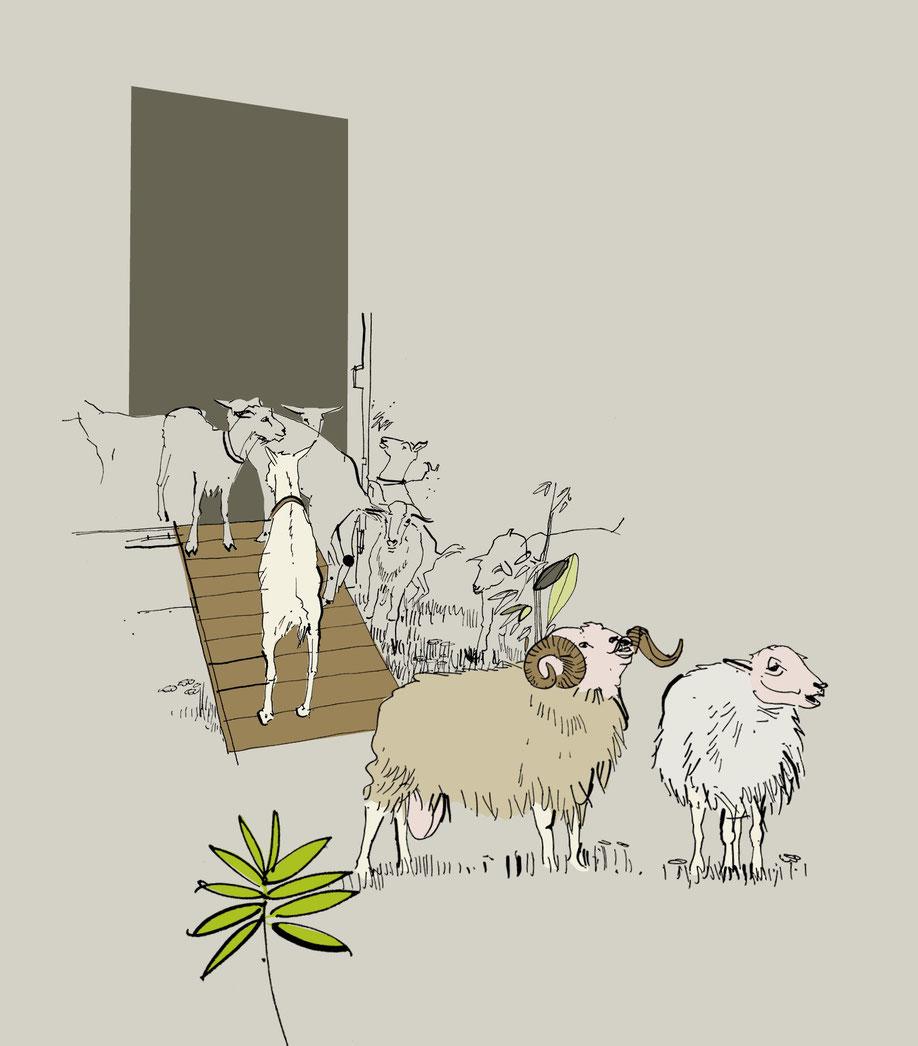 Schafe und Ziegen vor dem Stall