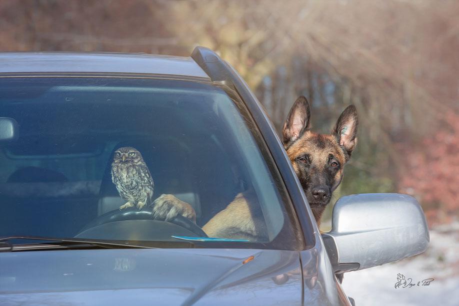 Hund und Eule: Beste Freunde
