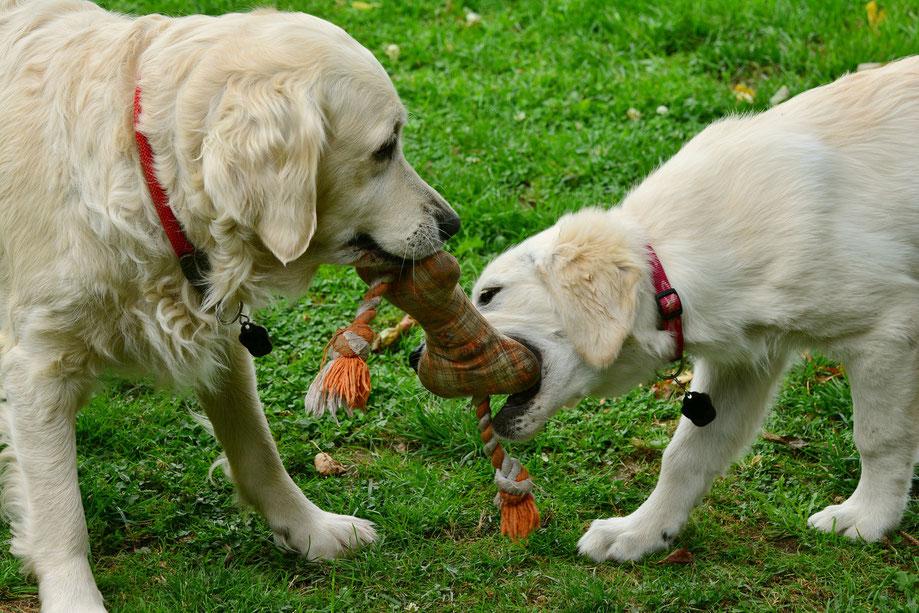 Sinnvolle Beschäftigung Auslastung für Deinen Hund / Deine Hunde