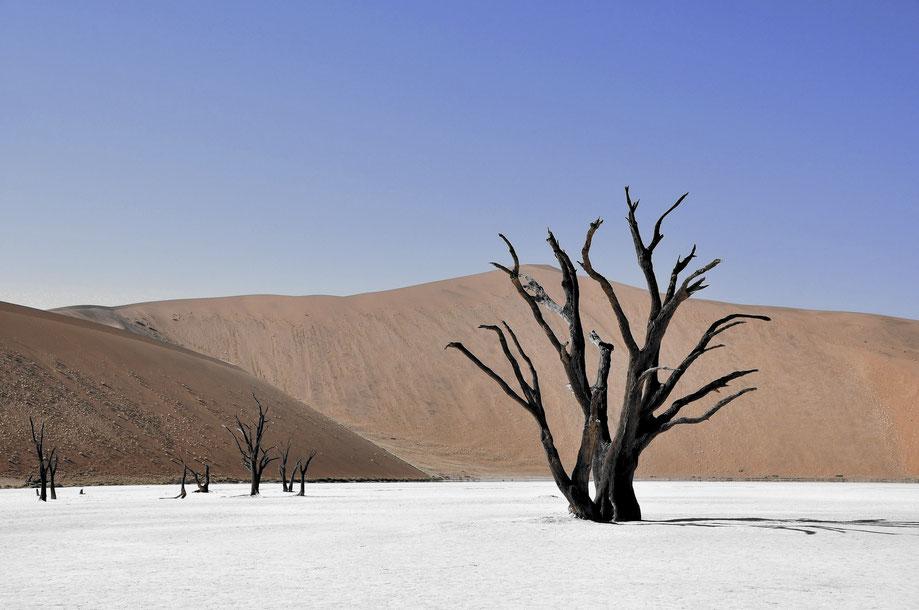 Memento Mori Carpe Diem Tod Leben Baum