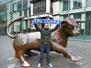 Mann mit Schal am Bullen in Birmingham