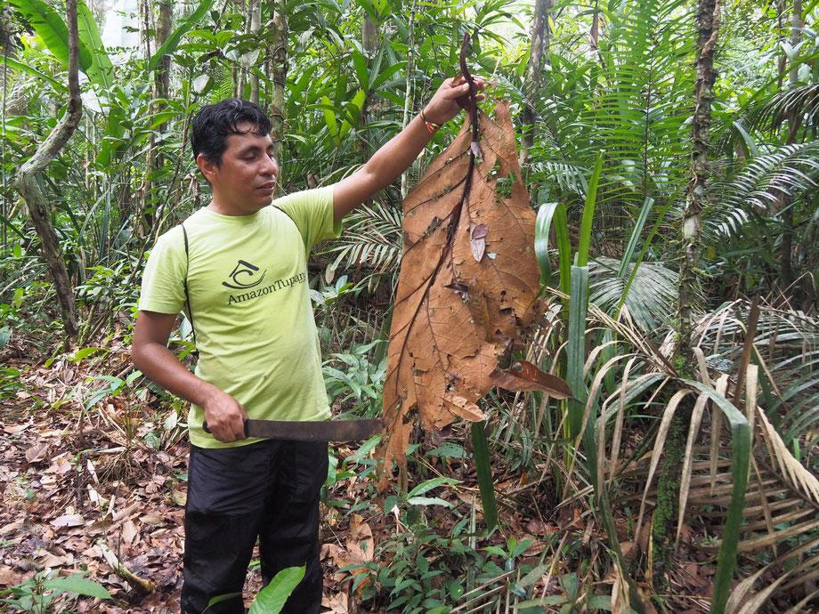Robinson Santos da Silva ist Guide am Amazonas und weiß, wie man im Urwald überleben kann