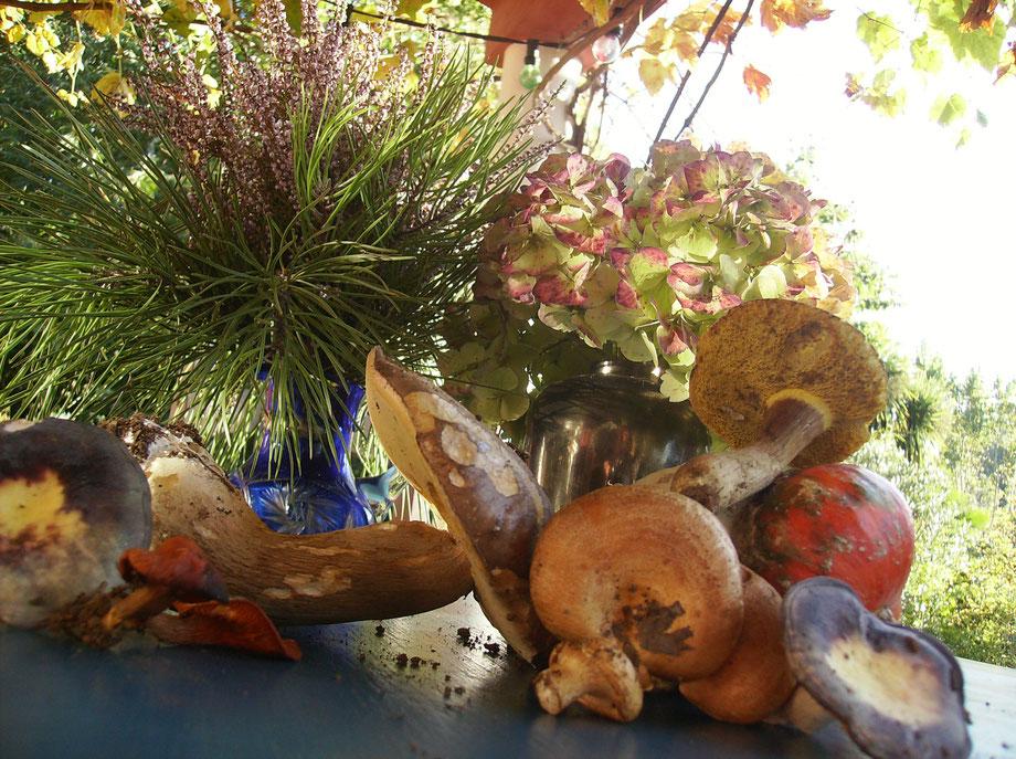 Pilzlehrfilm,100 Pilze im Frühjahr und Sommer,Mobile Pilzschule,Dieter Honstrass,Algarve,Portugal