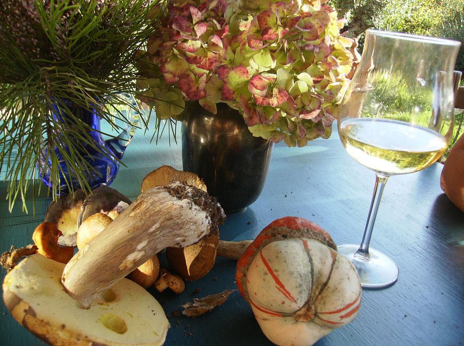 Pilzlehrfilm,100 Pilze in Portugal-Pilze der Algarve,Mobile Pilzschule,Dieter Honstrass,Portugal