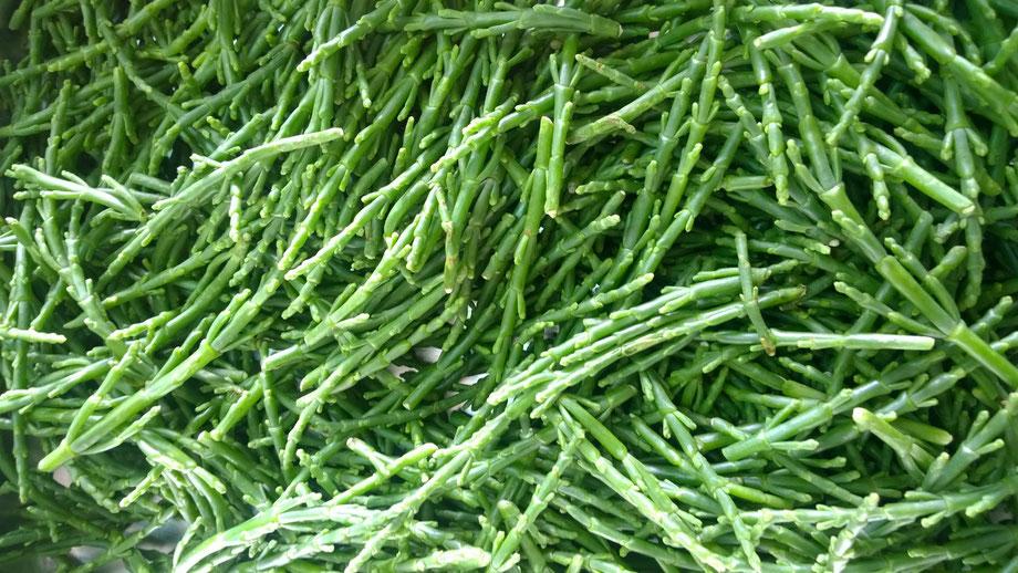 Salicorniaha,Queller,Gemüse,Legumes,Vegetables,Martins-Kulinarium,Carvoeiro,Algarve,Portugal