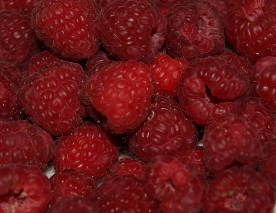 Himbeere,Framboesa,Raspberry,Früchte,Frutas,Fruit,Martins-Kulinarium,Carvoeiro,Algarve,Portugal