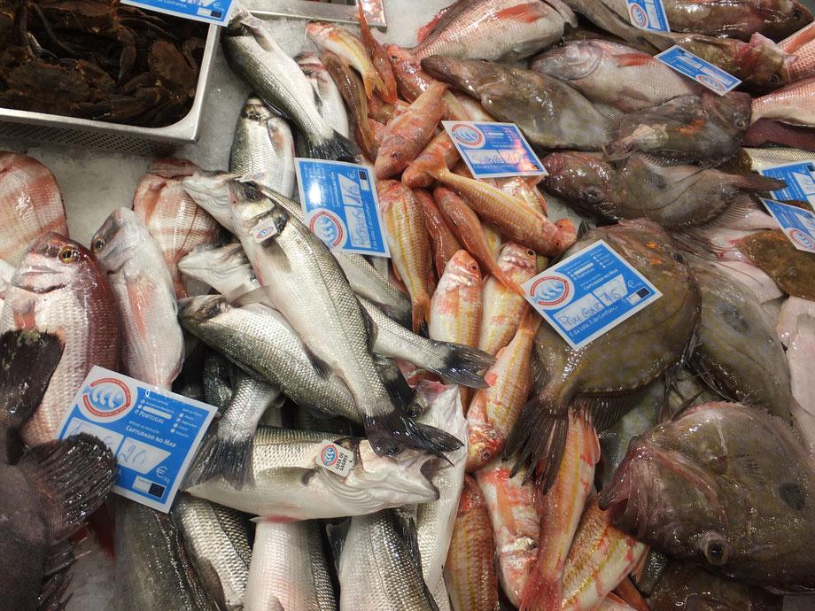 Fisch,Peixe,Fish,Martins-Kulinarium,Carvoeiro,Algarve,Portugal