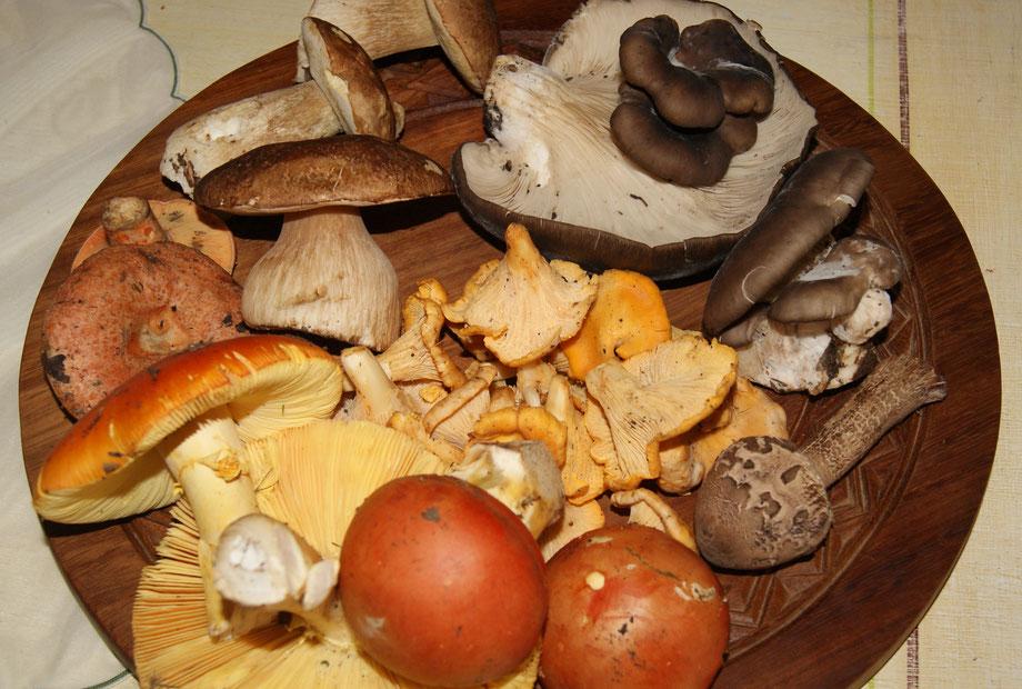 Pilzlehrfilm,Einführung in die Pilzkunde,Mobile Pilzschule,Dieter Honstrass,Algarve,Portugal