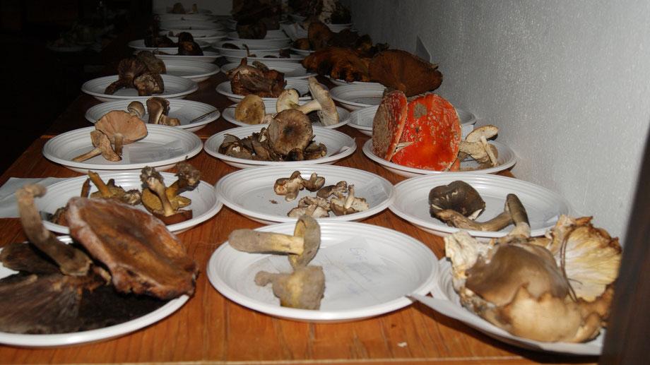 Pilzausstellung in Martins Kulinarium unter der Leitung der Mobilen Pilzschule,Dieter Honstrass,Carvoeiro,Lagoa,Algarve,Portugal