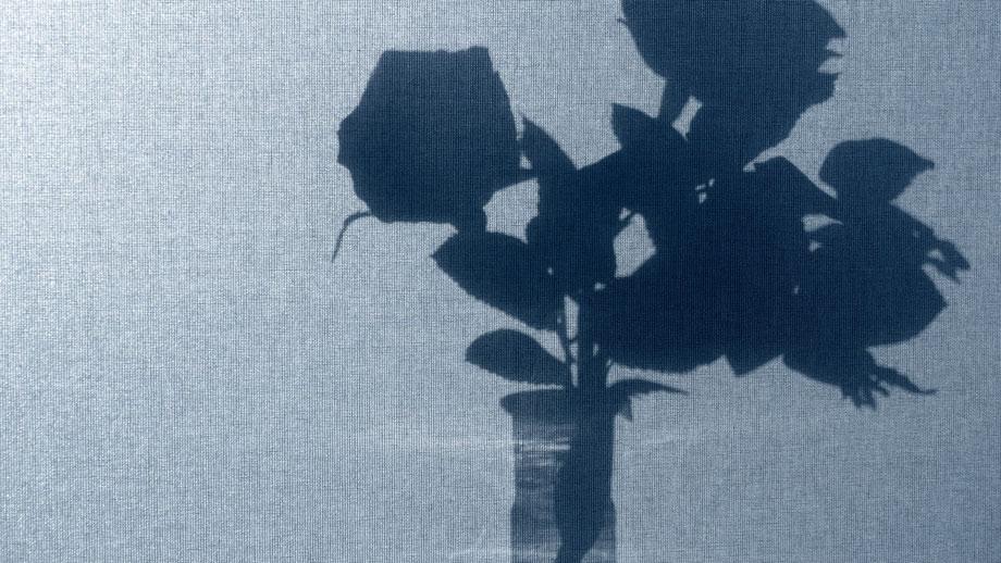 Schattenriss von Rosen in einem Erlmeierkolben