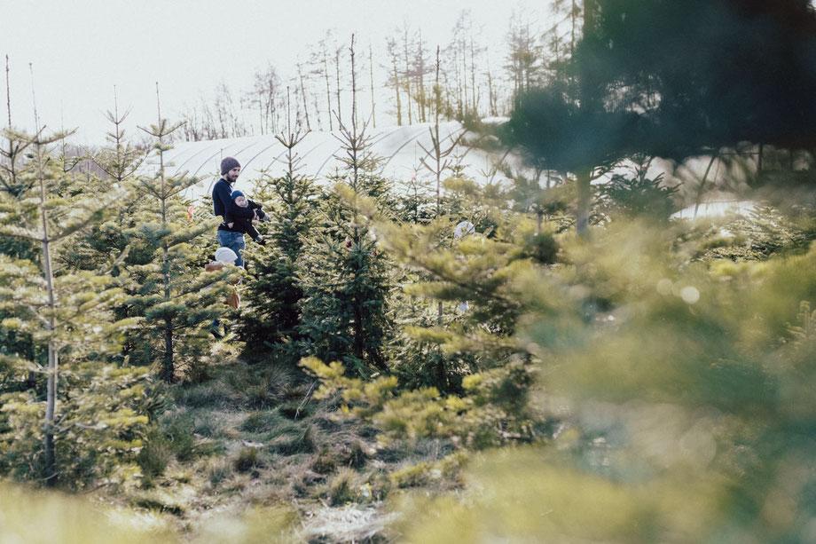 Weihnachtsbaum schlagen in Lüdinghausen, Nachhaltige Tannenbäume