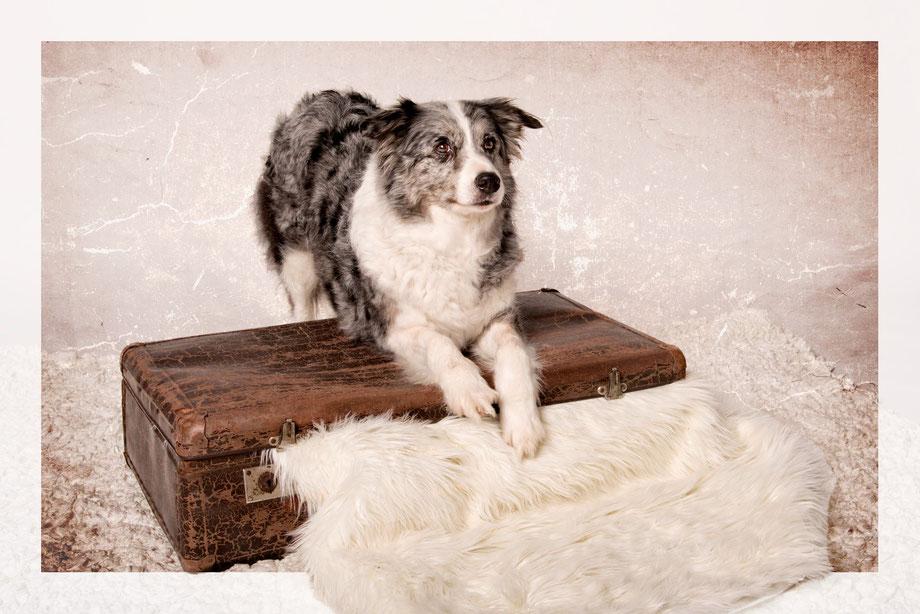 Hundeshootings mit viel Liebe umgesetzt. Wir nehmen uns für Ihren Liebling Zeit. Hundeshootings Bülach, Zürich