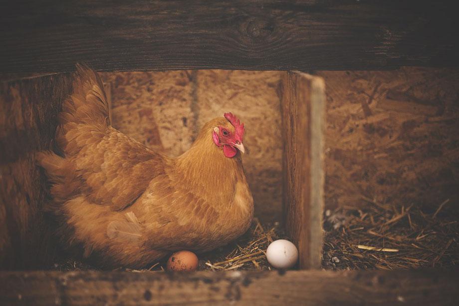 La poule aux œufs d'or!