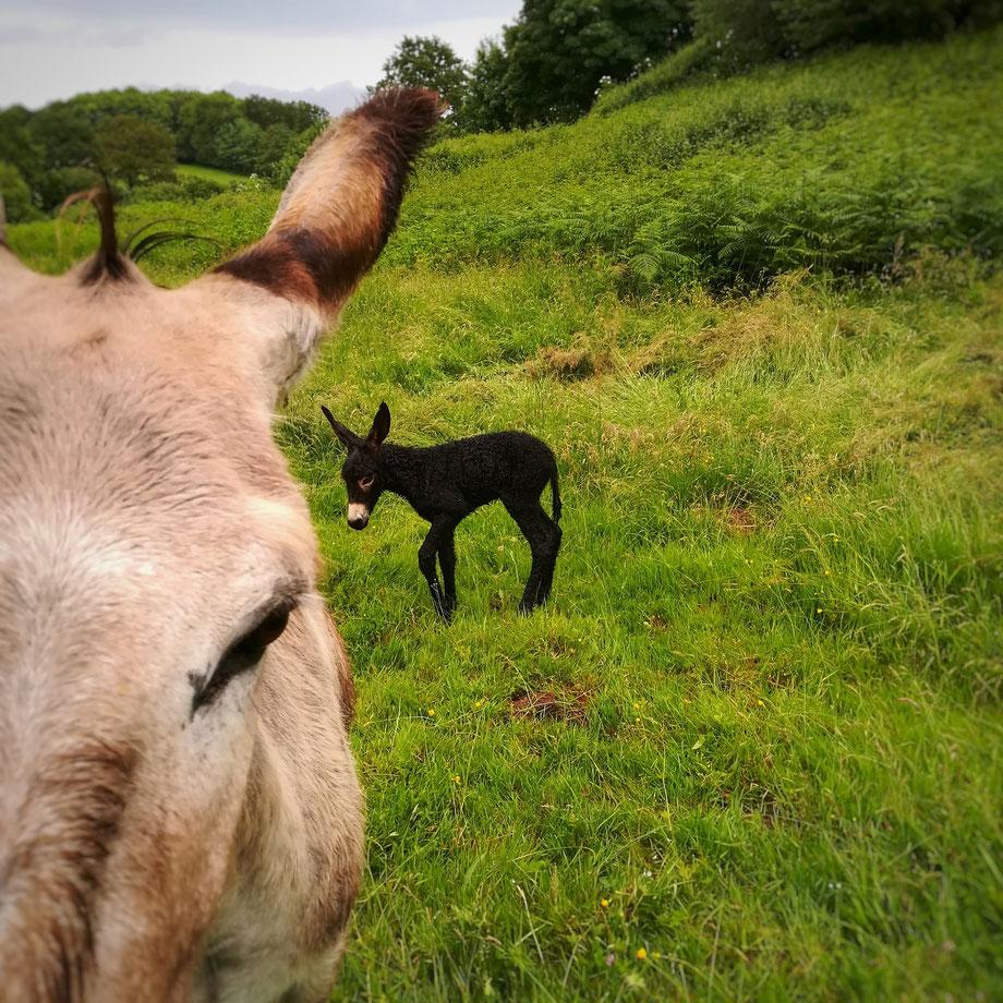 Un petit ânon est né!