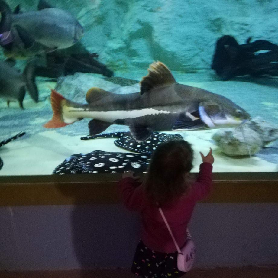 Première visite à l'aquarium