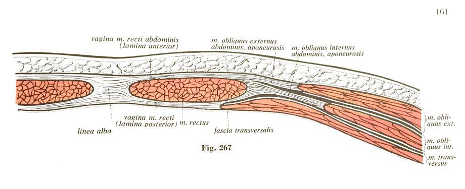 Riss In Der Bauchdecke