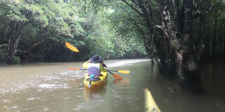 雨のマングローブ/浦内川支流