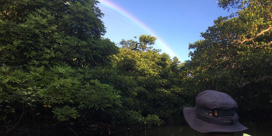 マングローブと虹/浦内川支流