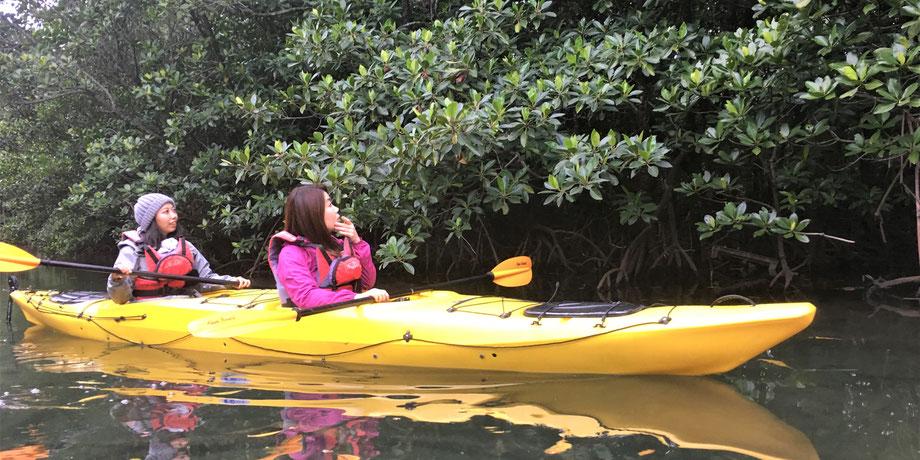 西表島・ガイドにおまかせツアー【マングローブカヌー&滝遊び】